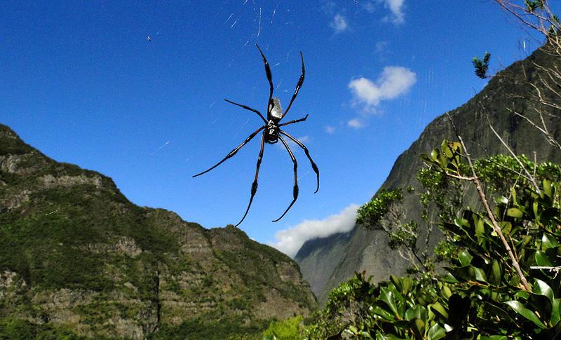 Célèbre Arachnophobes s'abstenir | FrancoiseGomarin.fr VV82